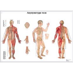 Акупунктура тела
